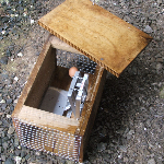 DOC 200 Stoat trap