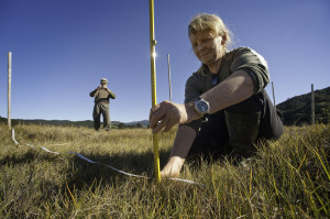 Kathi Parr and Wayne Todd measure growth of Saltwater Paspallum, an introduced weed at Wakawau wetland