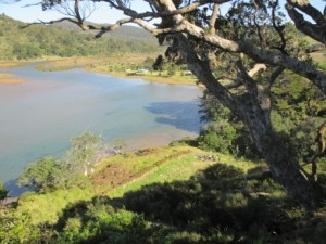Aerial view of our Children's forest next to Waikawau Bay estuary