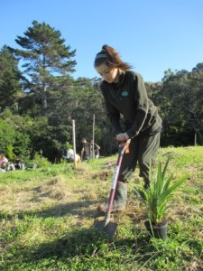 Sidney digs a hole ready for a little cabbage tree