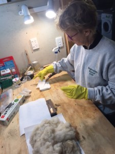 Raine portions out the stoat bedding. Each trap will get 5g of this smelly material, placed alongside the usual food lure (egg or rabbit).